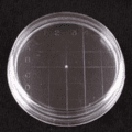 VWR Petri Dishes, Contact Plate, Sterile 3550 Flat Bottom, Inside Grid